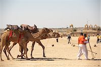 rajasthan camel - Camel Fair, Jaisalmer, Rajasthan, India Stock Photo - Premium Rights-Managednull, Code: 700-03406378