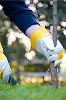 Close up of a man's hand planting a tree Stock Photo - Premium Rights-Managednull, Code: 822-03406638