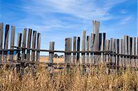 Old Farm through Wooden Fence, Mormon Row, Jackson Hole, Grand Teton National Park, Wyoming, USA Stock Photo - Premium Rights-Managednull, Code: 700-03407442