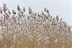 Snow Covered Grass, Rhode Island, USA