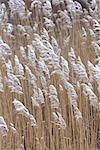 Snow Covered Grass, Rhode Island, USA Stock Photo - Premium Rights-Managed, Artist: Michael Eudenbach, Code: 700-03407549