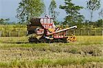 Combine Harvester in Rice Paddy, Chiang Rai Province, Thailand Stock Photo - Premium Rights-Managed, Artist: dk & dennie cody, Code: 700-03407562