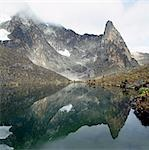 Hut Tarn lies at an altitude of 14,800 feet,close to the peaks of Mount Kenya (in cloud on the left at 17,058 feet). The plants growing round the tarn are giant groundsels or tree senecios (Senecio johnstonii ssp battiscombei),which are one of several plant species that display afro-montane gigantism above 10,000 feet. Stock Photo - Premium Rights-Managed, Artist: AWL Images, Code: 862-03437163