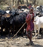 A young Maasai herdsboy controls his family's cattle at the Sanjan River to prevent too many animals watering at the same time. Stock Photo - Premium Rights-Managednull, Code: 862-03437402