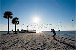 Photographer Taking Pictures of Seagulls, Hudson Beach, Florida, USA Stock Photo - Premium Rights-Managed, Artist: Bettina Salomon, Code: 700-03439234