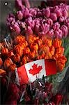 Tulips at Market, Vancouver, British Columbia, Canada Stock Photo - Premium Rights-Managed, Artist: Ed Gifford, Code: 700-03439567
