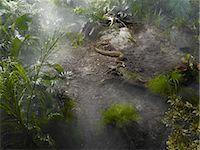 Burmese Python in the Jungle Stock Photo - Premium Royalty-Freenull, Code: 600-03439617