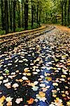 Road with Fall Leaves, Skyline Drive, Virginia, USA Stock Photo - Premium Rights-Managed, Artist: Jeremy Woodhouse, Code: 700-03440222