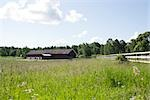 Field of tall grass, barn in distance Stock Photo - Premium Royalty-Free, Artist: Visuals Unlimited, Code: 633-03444762