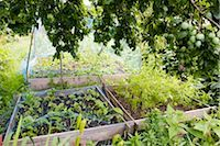 Netting protecting vegetables growing in garden Stock Photo - Premium Royalty-Freenull, Code: 633-03444856