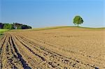 Lime Tree on Farm, Bavaria, Germany Stock Photo - Premium Rights-Managed, Artist: Martin Ruegner, Code: 700-03445254