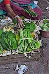 Betel Leaves at Market, Mysore, Karnataka, India Stock Photo - Premium Rights-Managed, Artist: Edward Pond, Code: 700-03445332