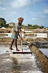 Salt Farming, Andhra Pradesh, India Stock Photo - Premium Rights-Managed, Artist: Edward Pond, Code: 700-03445335