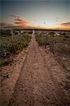 Road, Todos los Santos, Baja, Mexico