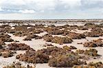Desert Landscape, Baja, Mexico