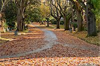 Street in Autumn, Oregon, USA Stock Photo - Premium Rights-Managednull, Code: 700-03446109