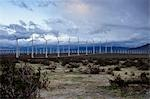 Wind Farm, Desert Hot Springs, Riverside County, California, USA Stock Photo - Premium Rights-Managed, Artist: Brian Kuhlmann, Code: 700-03446180