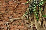 Close-up of Roots on Brick Wall, Wat Mahathat, Ayutthaya, Thailand Stock Photo - Premium Royalty-Free, Artist: Jochen Schlenker, Code: 600-03451297
