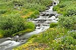 Blurred water in stream and wildflowers Stock Photo - Premium Royalty-Freenull, Code: 635-03457647