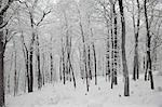 Snow Covered Forest, Tuxedo, Orange County, New York, USA Stock Photo - Premium Royalty-Free, Artist: Michael Filonow, Code: 600-03460237