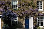 Wisteria on Kew Green, Kew, Greater London Stock Photo - Premium Rights-Managed, Artist: Arcaid, Code: 845-03463891