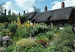 Anne Hathaway's Cottage, Stratford on Avon, England, 16th century. Home of William Shakespeare's wife until 1582. Stock Photo - Premium Rights-Managed, Artist: Arcaid, Code: 845-03464089