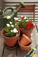 Potted Plants and Gardening Equipment on Roof Garden Table Stock Photo - Premium Royalty-Freenull, Code: 600-03484532
