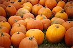Pumpkin Patch, Ontario, Canada Stock Photo - Premium Rights-Managed, Artist: Derek Shapton, Code: 700-03484971