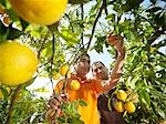 Father and son picking oranges Stock Photo - Premium Royalty-Free, Artist: foodanddrinkphotos, Code: 649-03487633