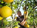 Man picking oranges Stock Photo - Premium Royalty-Free, Artist: Robert Harding Images    , Code: 649-03487634