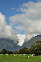 Farmland and Fox Glacier, West Coast, South Island, New Zealand Stock Photo - Premium Royalty-Freenull, Code: 600-03508356