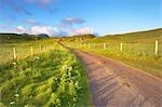 Empty Road, Isle of Lewis, Scotland Stock Photo - Premium Rights-Managed, Artist: Tim Hurst, Code: 700-03508656