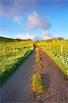 Empty Road, Isle of Lewis, Scotland Stock Photo - Premium Rights-Managed, Artist: Tim Hurst, Code: 700-03508657