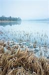Reeds, Loch Achray, Trossachs, Stirling, Scotland, United Kingdom Stock Photo - Premium Rights-Managed, Artist: Tim Hurst, Code: 700-03508671