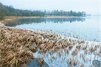 Reeds, Loch Achray, Trossachs, Stirling, Scotland, United Kingdom Stock Photo - Premium Rights-Managednull, Code: 700-03508674