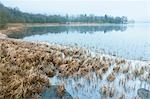 Reeds, Loch Achray, Trossachs, Stirling, Scotland, United Kingdom Stock Photo - Premium Rights-Managed, Artist: Tim Hurst, Code: 700-03508674