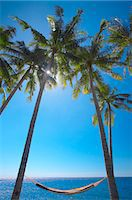 Hammock between palm trees on beach, Bali, Indonesia, Southeast Asia, Asia Stock Photo - Premium Rights-Managednull, Code: 841-03518373