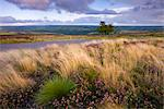 Summer heather and grasses on Dunkery Hill, Exmoor National Park, Somerset, England, United Kingdom, Europe Stock Photo - Premium Rights-Managed, Artist: Robert Harding Images, Code: 841-03518641
