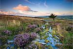 Flowering heather on Dunkery Hill in summertime, Exmoor National Park, Somerset, England, United Kingdom, Europe Stock Photo - Premium Rights-Managed, Artist: Robert Harding Images, Code: 841-03518642
