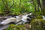 Rocky River Plym near Shaugh Prior in Dartmoor National Park, Devon, England, United Kingdom, Europe Stock Photo - Premium Rights-Managed, Artist: Robert Harding Images, Code: 841-03518646