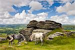 Ponies graze beside Chinkwell Tor in Dartmoor National Park, Devon, England, United Kingdom, Europe Stock Photo - Premium Rights-Managed, Artist: Robert Harding Images, Code: 841-03518699