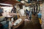 People Working at Tsukiji Central Wholesale Market, Tokyo, Japan Stock Photo - Premium Rights-Managed, Artist: Ikonica, Code: 700-03520452