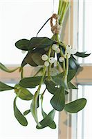 Bunch of mistletoe at window Stock Photo - Premium Royalty-Freenull, Code: 659-03525468