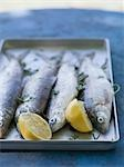 Fresh trout with lemon and parsley, ready for grilling Stock Photo - Premium Royalty-Free, Artist: AWL Images, Code: 659-03529663