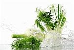 Fennel bulbs with splashing water Stock Photo - Premium Royalty-Freenull, Code: 659-03533785