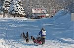 On the in-bound trail nearing the finish line of the 2009 Junior Iditarod Sled Dog Race, Willow, Alaska Stock Photo - Premium Rights-Managed, Artist: AlaskaStock, Code: 854-03537959