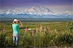 Female visitor views Mt.Mckinley & Alaska Range through binoculars next to fireweed flowers Denali National Park Alaska Stock Photo - Premium Rights-Managed, Artist: AlaskaStock, Code: 854-03538128