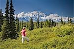 A young woman tourist views MtMcKinley and the Alaska Range in Denali National Park Alaska summer Stock Photo - Premium Rights-Managed, Artist: AlaskaStock, Code: 854-03538173
