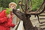 Visitor feeds a caribou in the Alaska Rainforest Sanctuary in Ketchikan, Alaska during Summer Stock Photo - Premium Rights-Managed, Artist: AlaskaStock, Code: 854-03538288