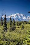Mt McKinley and the Alaska Range as seen from inside Denali National Park Alaska summer Stock Photo - Premium Rights-Managed, Artist: AlaskaStock, Code: 854-03539439